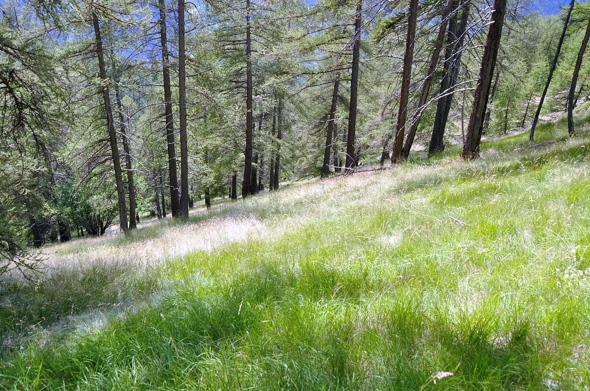Forêt de Sélasse