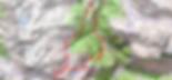 Randonnée au lac de Bastampe en boucle, par la crête de Bastampe et le lac de Litouèse. Départ depuis Agnouède. Randonnée sauvage, classique jusqu'au lac de Bastampe, mais beaucoup plus sauvage en boucle. Topo, itinéraire, trace GPS, carte IGN, et photos.