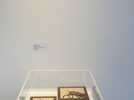 Exposição: Objetos do desejo - Instrumentos do Coleccionismo