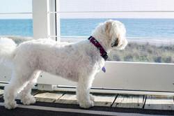 Sadie keeps an eye on her beach