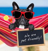 Pet friendly accomodatons