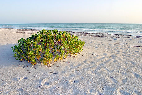 An emprty beach on palm island florida