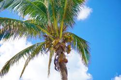 A true tropical island