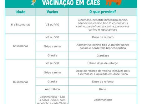 Protocolo de Vacinação Cão