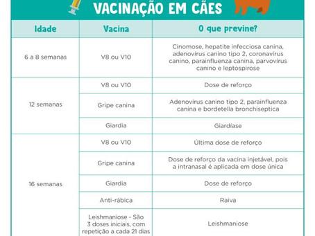PROTOCOLO DE VACINAÇÃO - CÃES