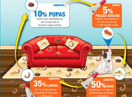 Controle de Pulgas em Cães e Gatos