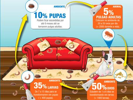 CONTROLE DE PULGAS - CÃES E GATOS