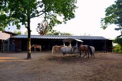 Offenlaufstall Dützhof
