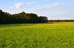 Weiden Dützhof