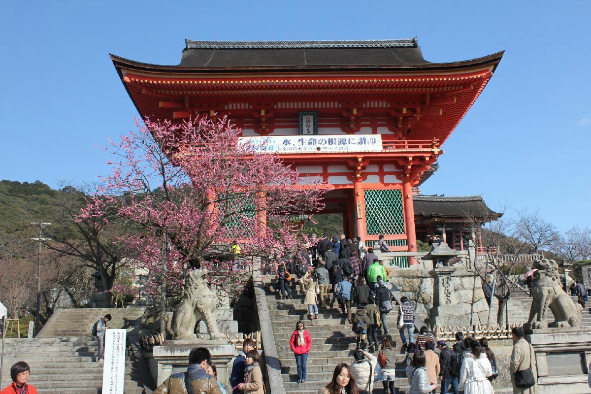 004 - Japanese blossom - Eric Pignolo.JPG