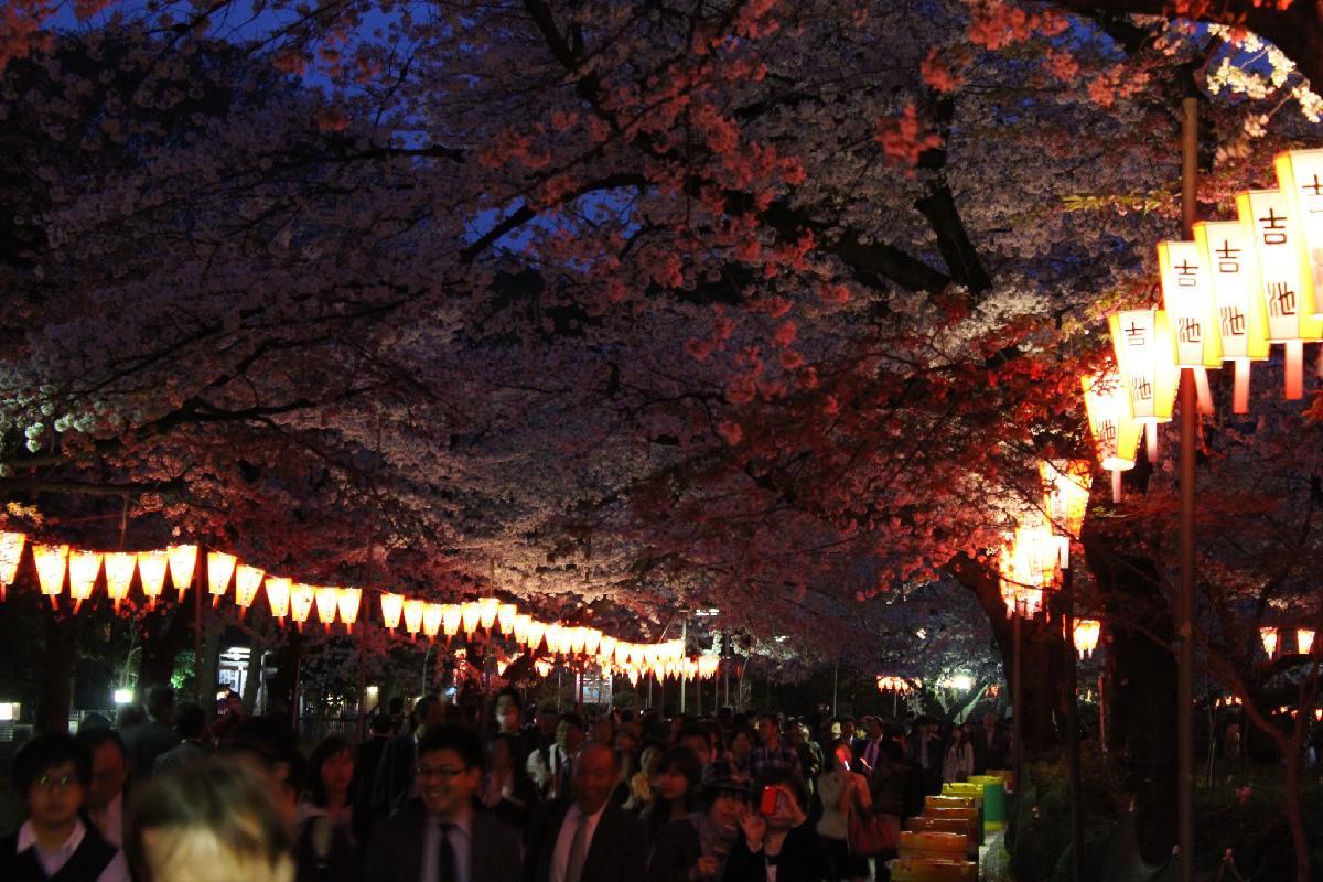 121 - Japanese blossom - Eric Pignolo.JPG