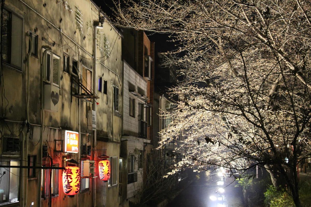 008 - Japanese blossom - Eric Pignolo.JPG