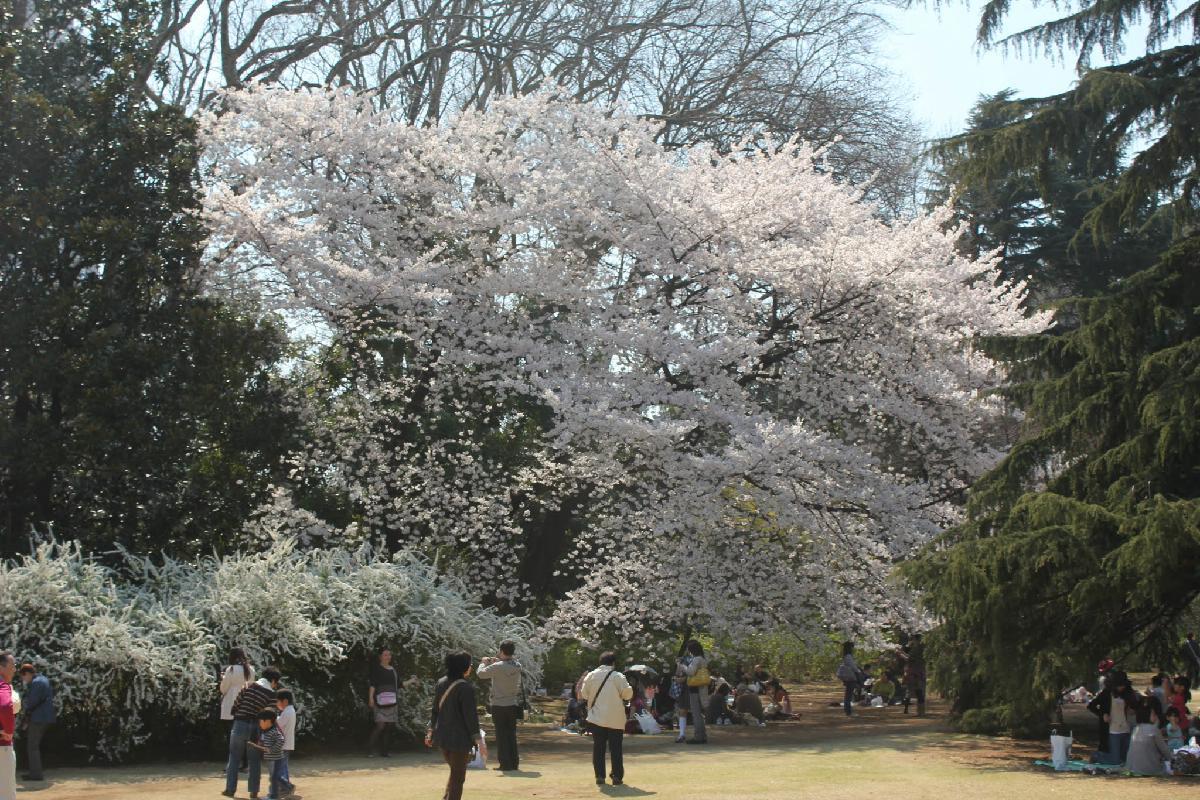 087 - Japanese blossom - Eric Pignolo.JPG