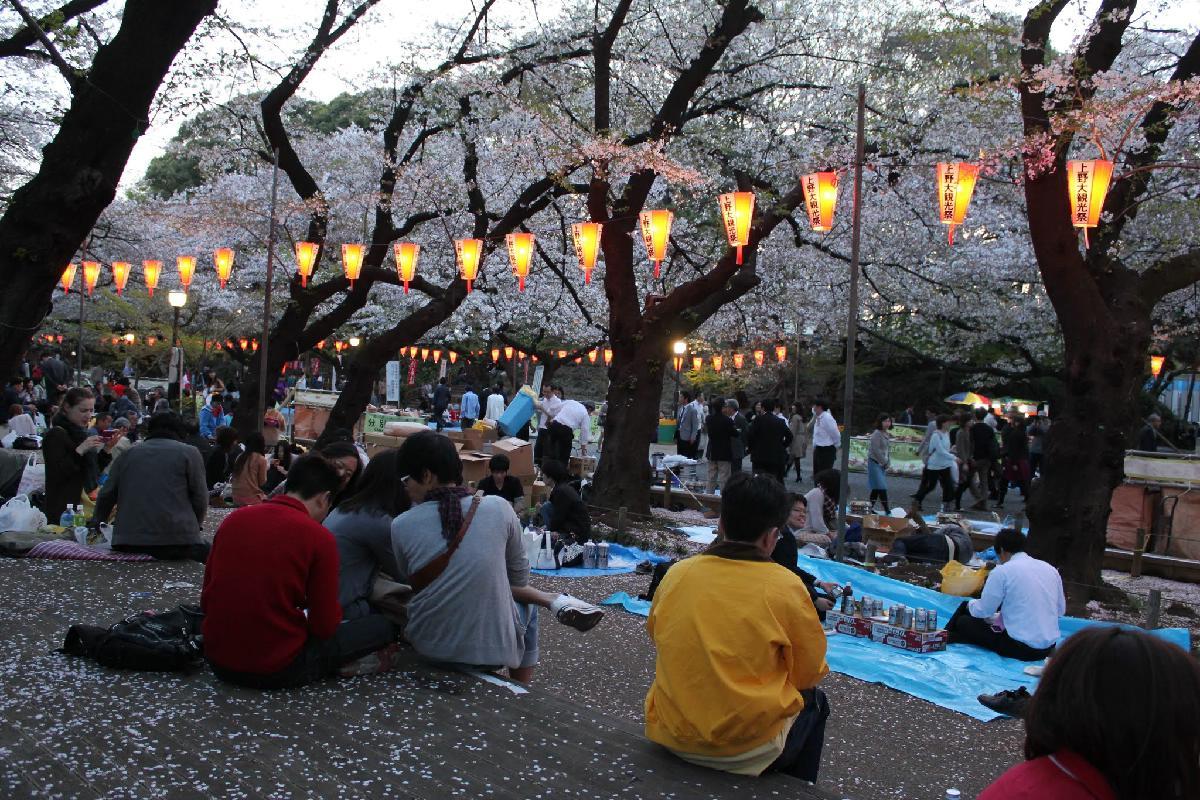 144 - Japanese blossom - Eric Pignolo.JPG