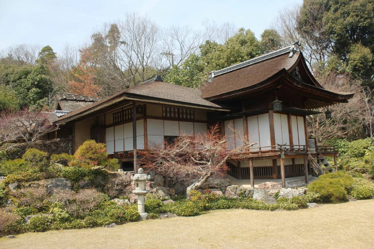 014 - Japanese blossom - Eric Pignolo.JPG