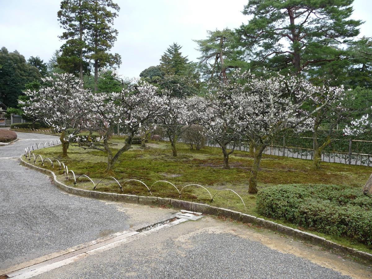 146 - Japanese blossom - Eric Pignolo.JPG