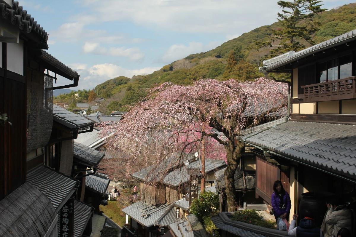 003 - Japanese blossom - Eric Pignolo.JPG