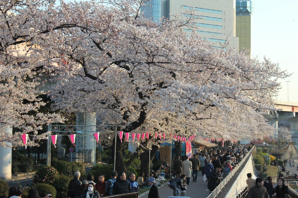 066 - Japanese blossom - Eric Pignolo.JPG