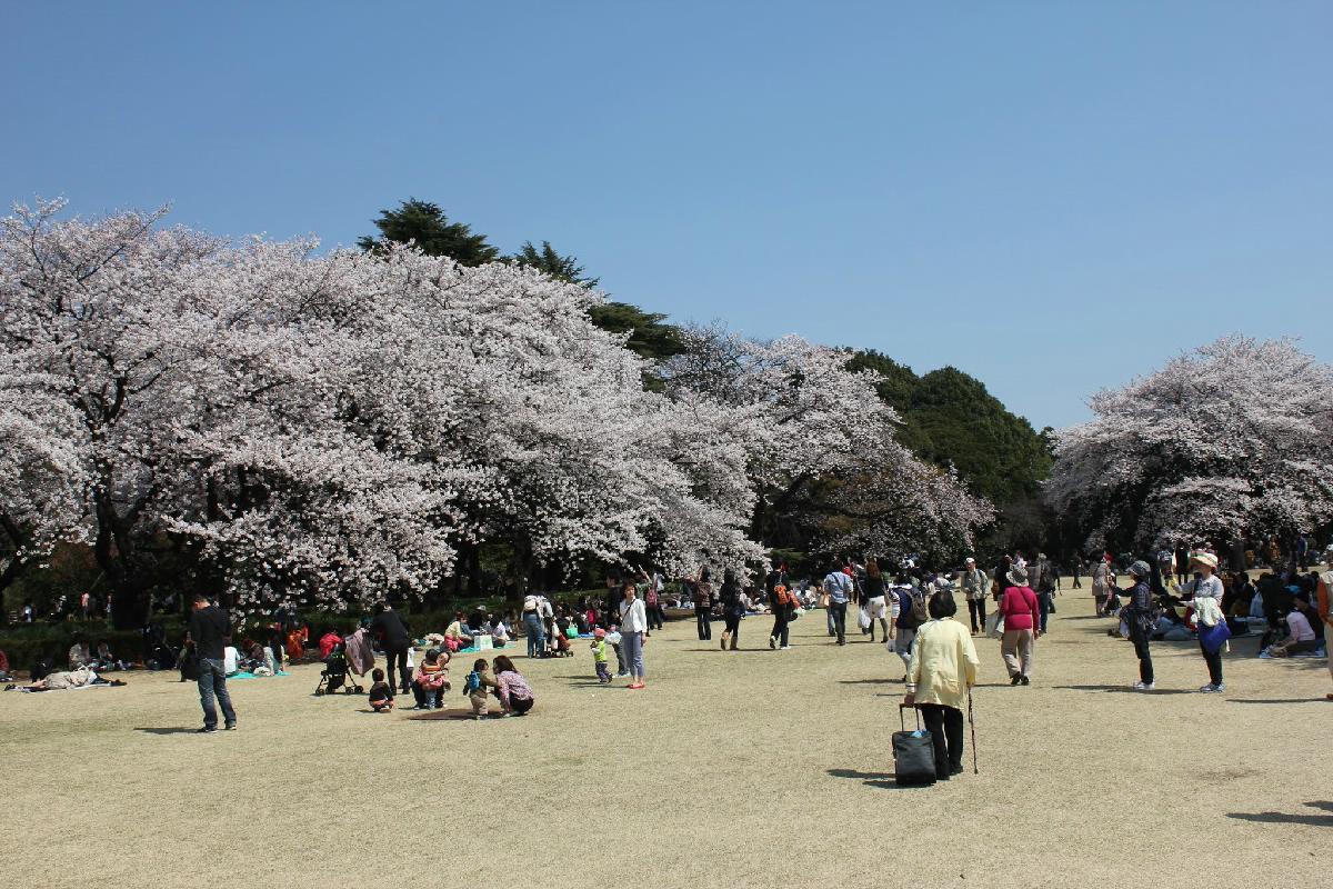 085 - Japanese blossom - Eric Pignolo.JPG
