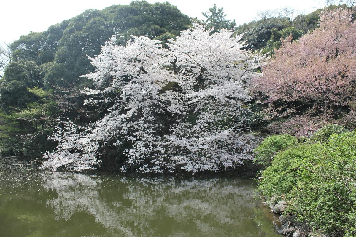 113 - Japanese blossom - Eric Pignolo.JPG