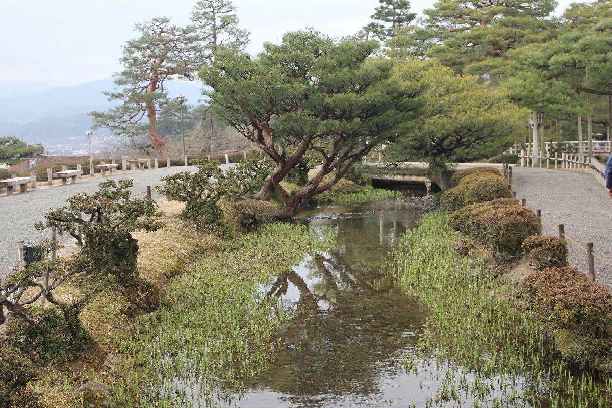 050 - Japanese blossom - Eric Pignolo.JPG