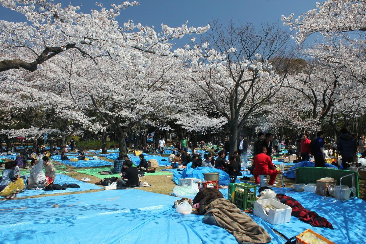 054 - Japanese blossom - Eric Pignolo.JPG