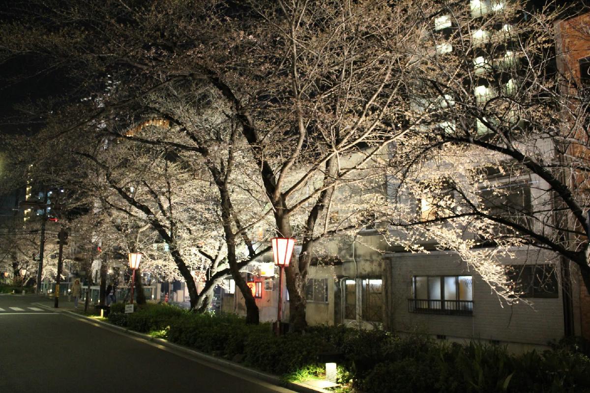 027 - Japanese blossom - Eric Pignolo.JPG