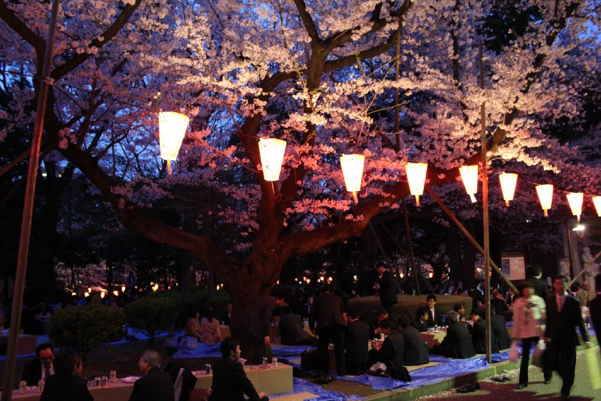 120 - Japanese blossom - Eric Pignolo.JPG