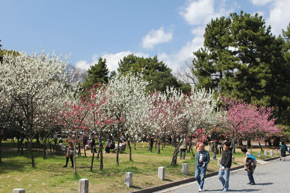 043 - Japanese blossom - Eric Pignolo.JPG