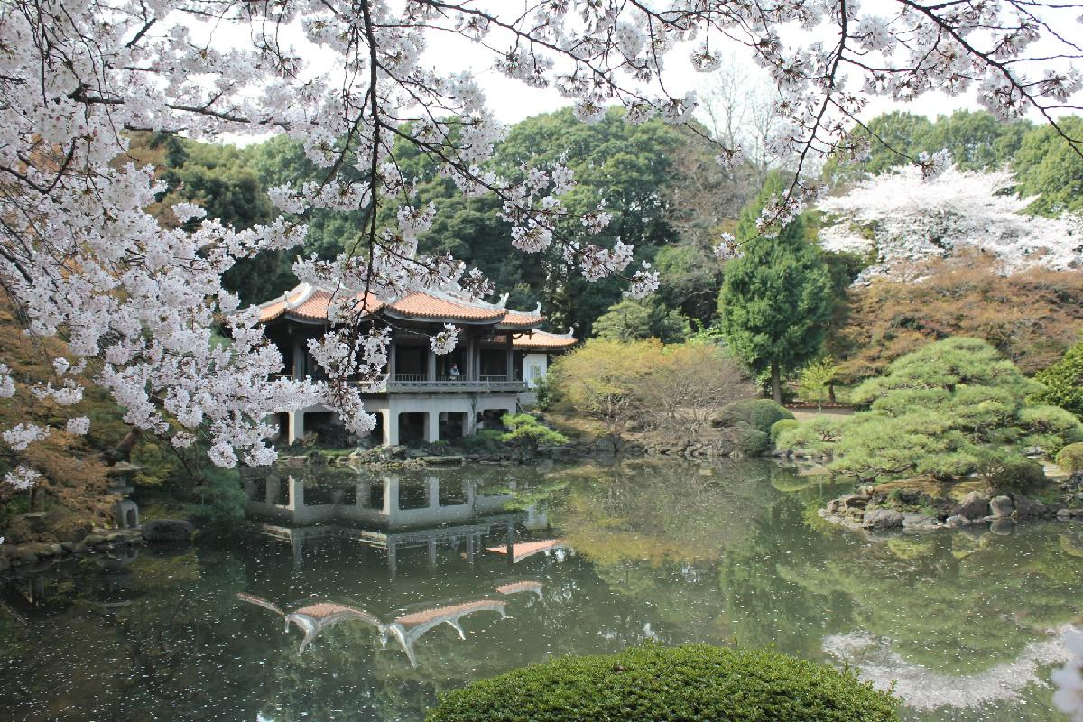 103 - Japanese blossom - Eric Pignolo.JPG