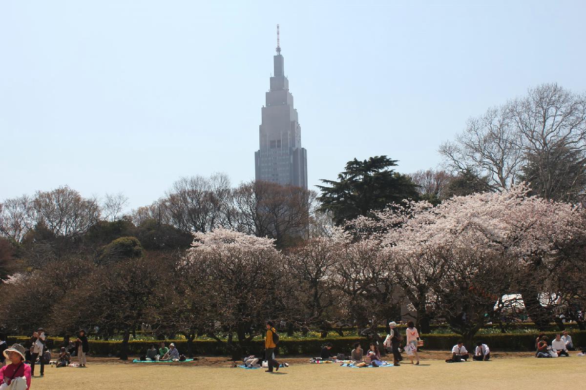084 - Japanese blossom - Eric Pignolo.JPG