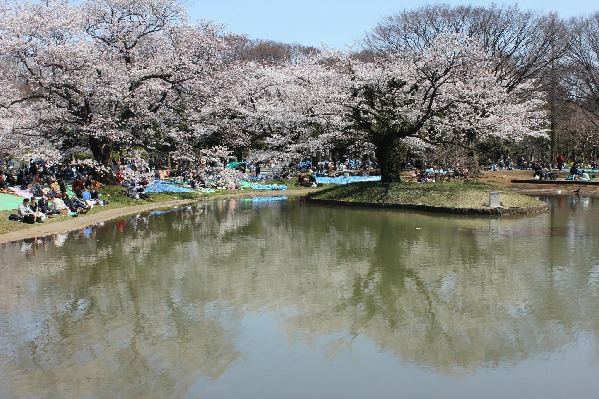 056 - Japanese blossom - Eric Pignolo.JPG