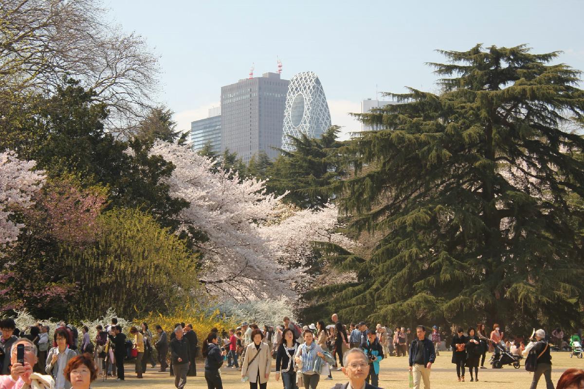 086 - Japanese blossom - Eric Pignolo.JPG