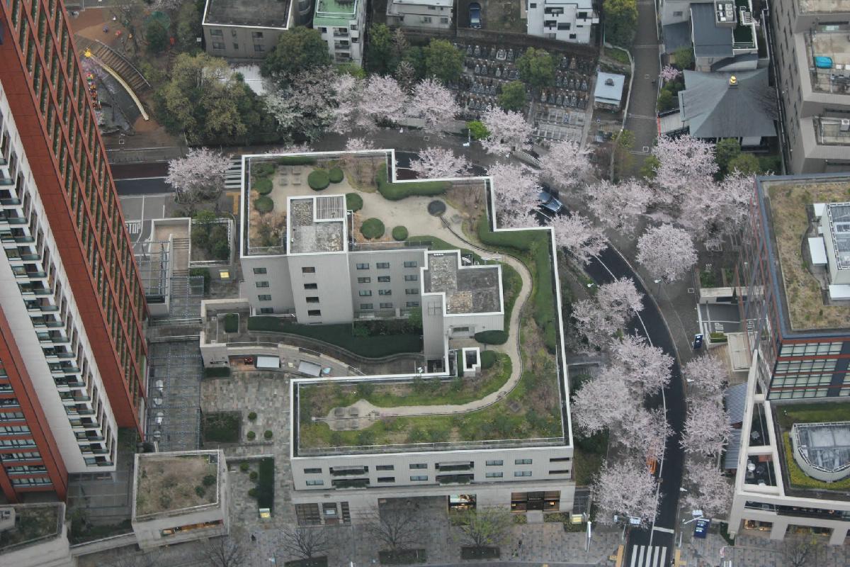 131 - Japanese blossom - Eric Pignolo.JPG