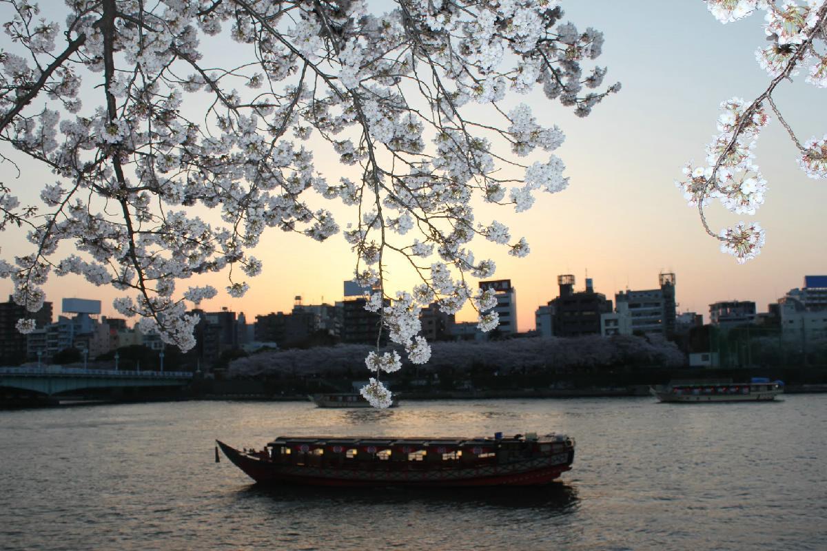 072 - Japanese blossom - Eric Pignolo.JPG