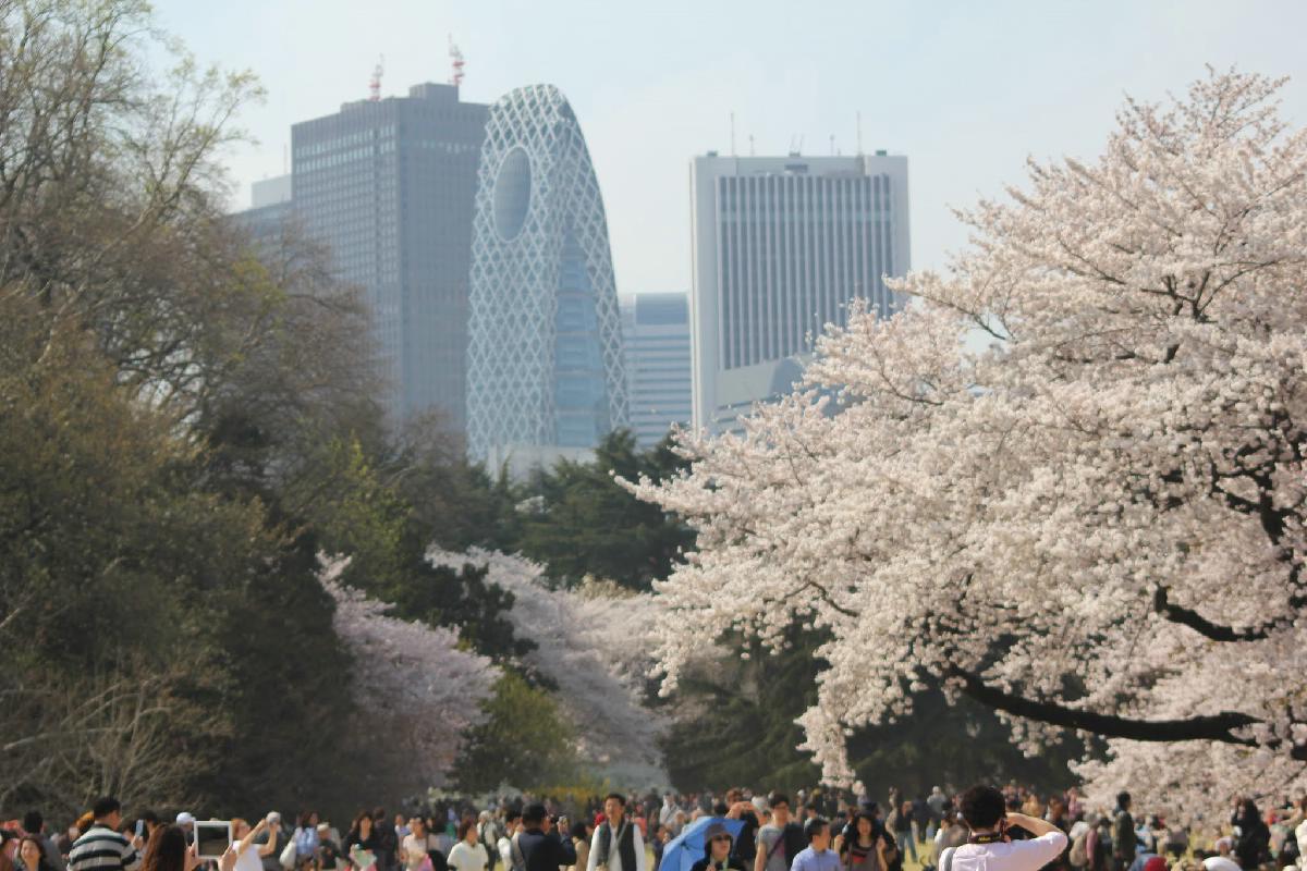 090 - Japanese blossom - Eric Pignolo.JPG