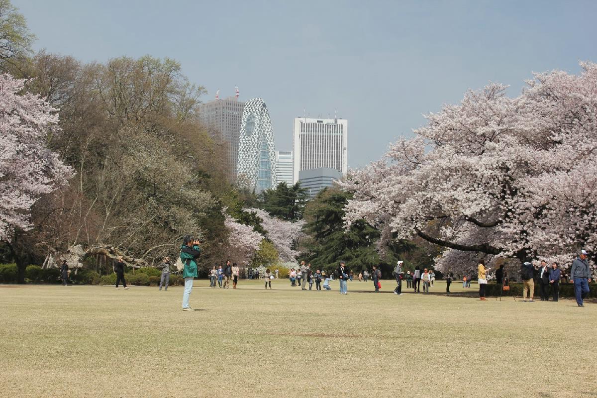 101 - Japanese blossom - Eric Pignolo.JPG