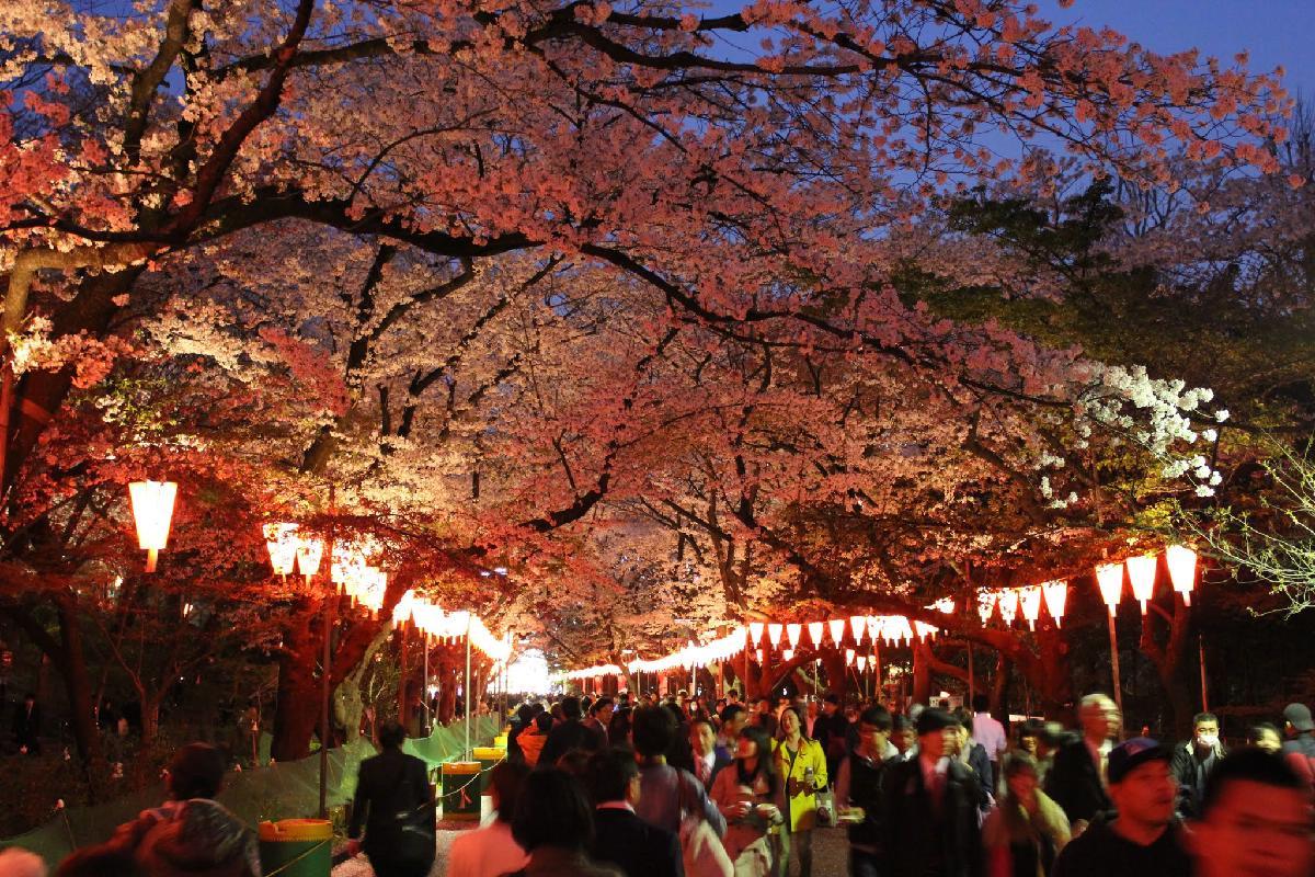 122 - Japanese blossom - Eric Pignolo.JPG