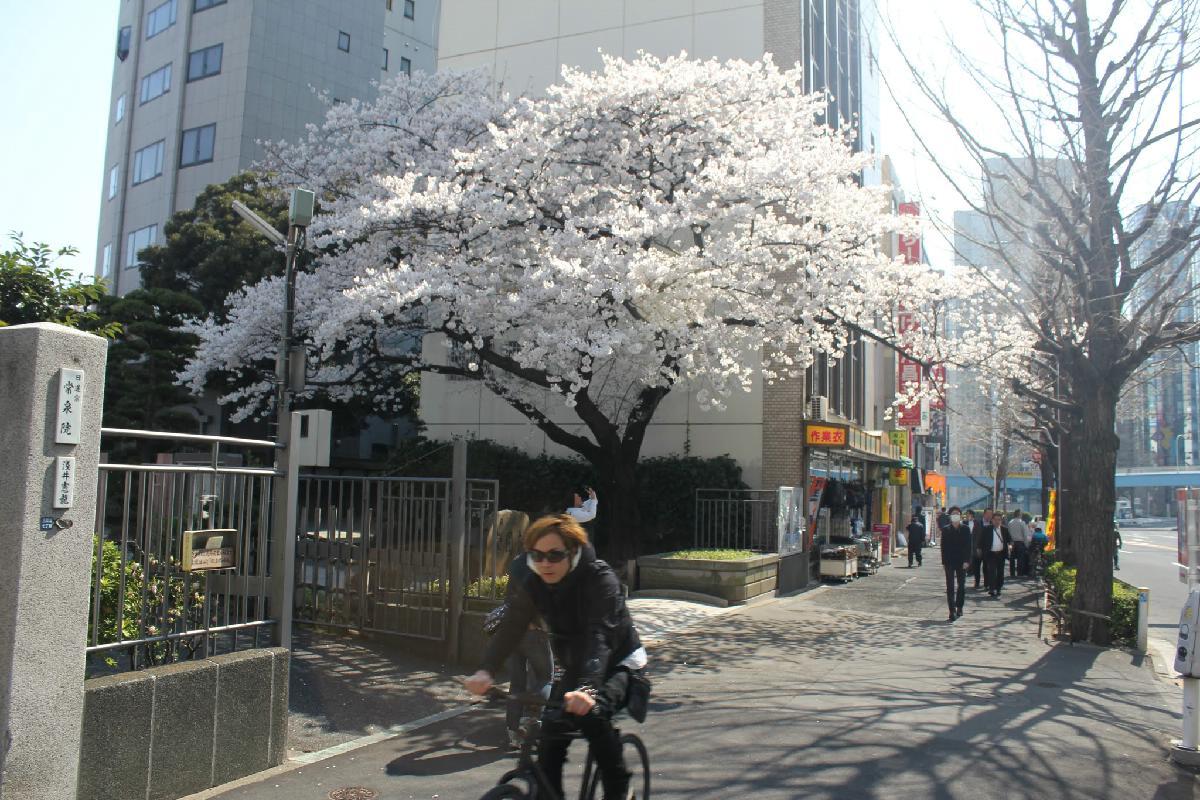 078 - Japanese blossom - Eric Pignolo.JPG
