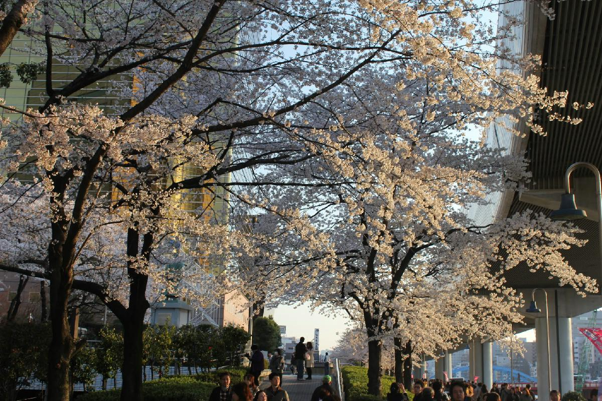 064 - Japanese blossom - Eric Pignolo.JPG