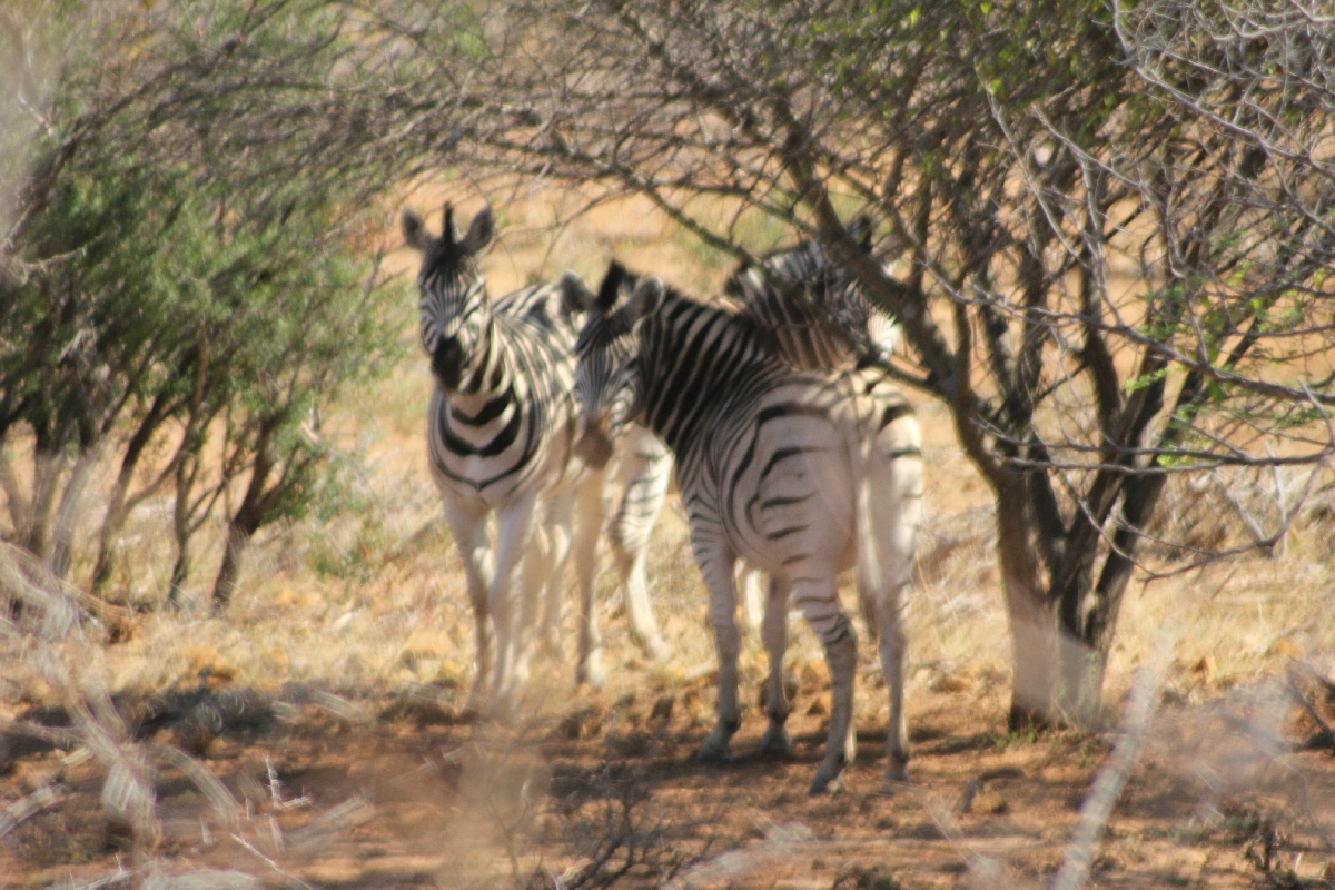 057b - Eric Pignolo - Southern Africa 20