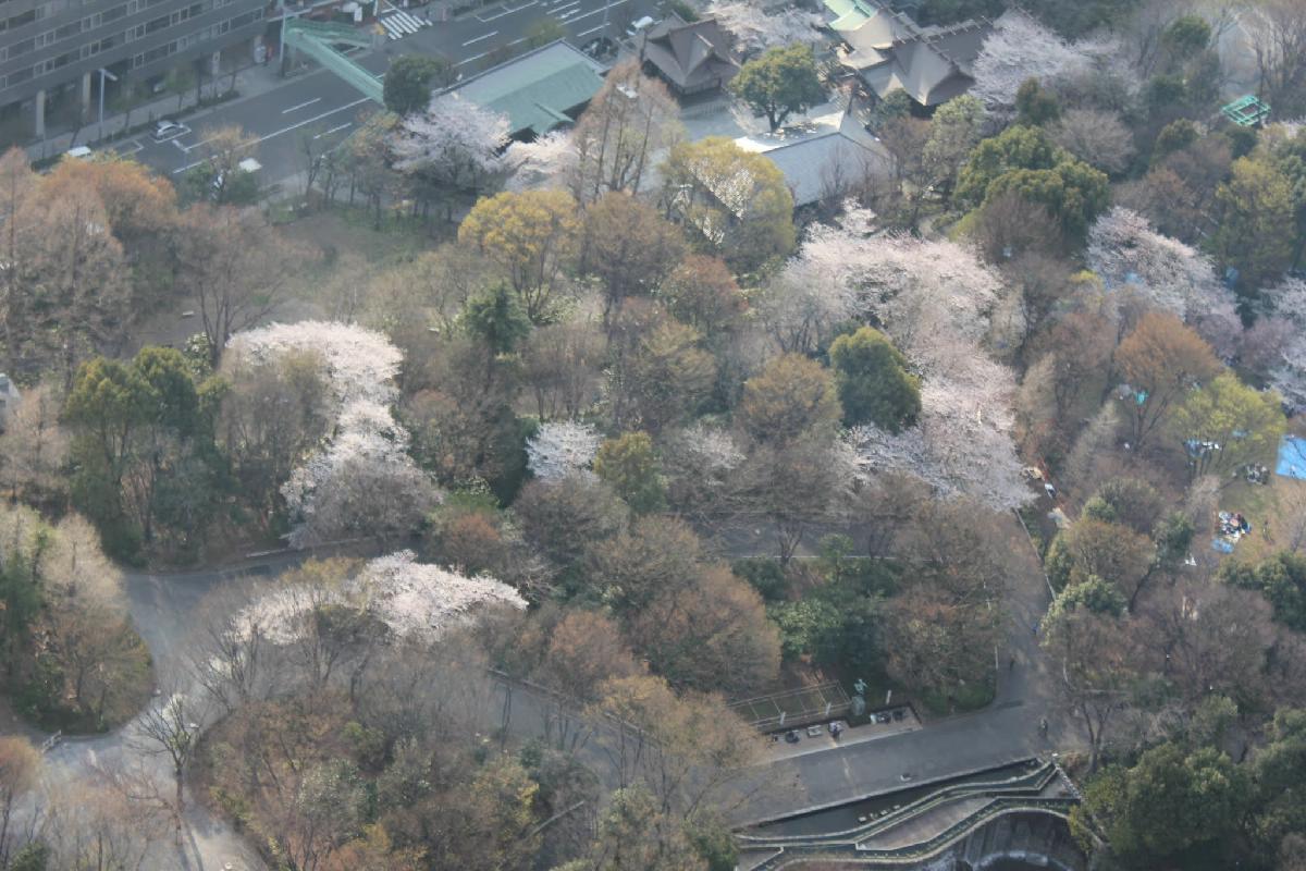 093 - Japanese blossom - Eric Pignolo.JPG