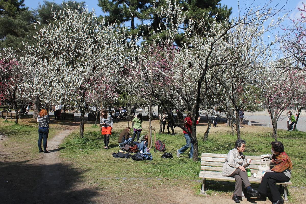 040 - Japanese blossom - Eric Pignolo.JPG