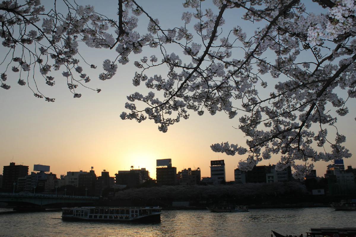 069 - Japanese blossom - Eric Pignolo.JPG