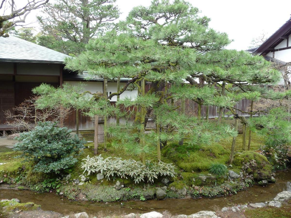 160 - Japanese blossom - Eric Pignolo.JPG