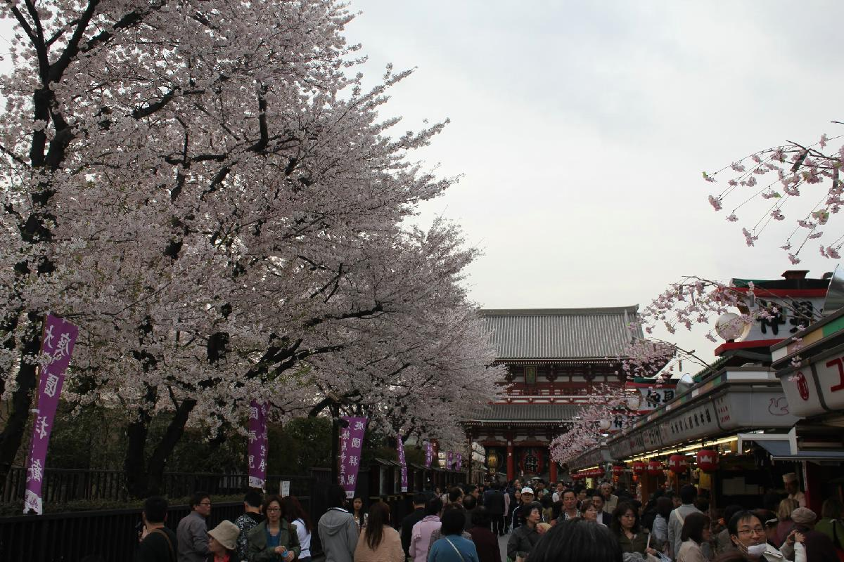 117 - Japanese blossom - Eric Pignolo.JPG