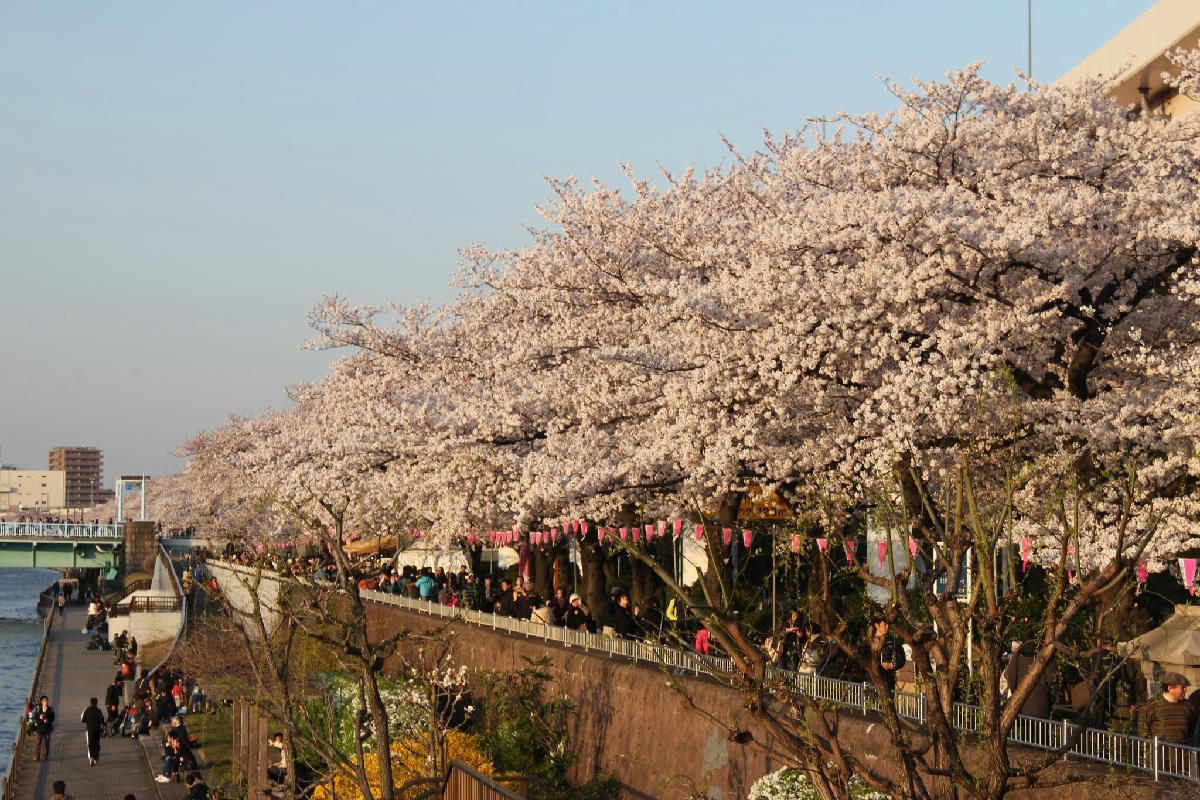 065 - Japanese blossom - Eric Pignolo.JPG