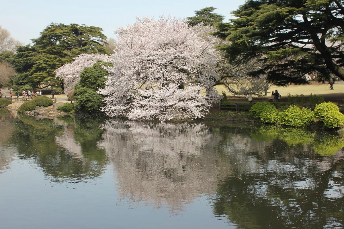 105 - Japanese blossom - Eric Pignolo.JPG