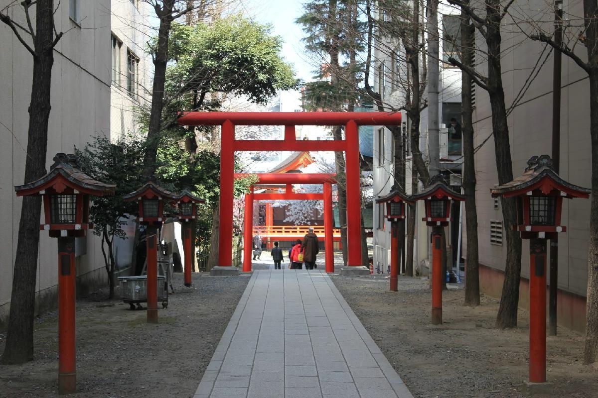 083 - Japanese blossom - Eric Pignolo.JPG