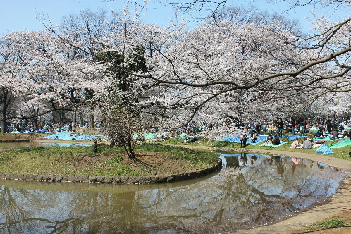 058 - Japanese blossom - Eric Pignolo.JPG